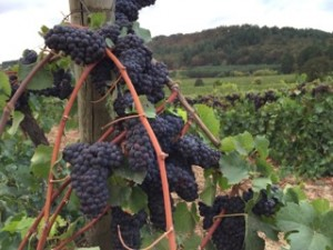 Oregon Wine Country 8/2015