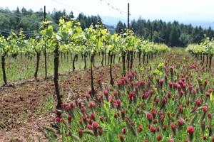 Vineyard flowers